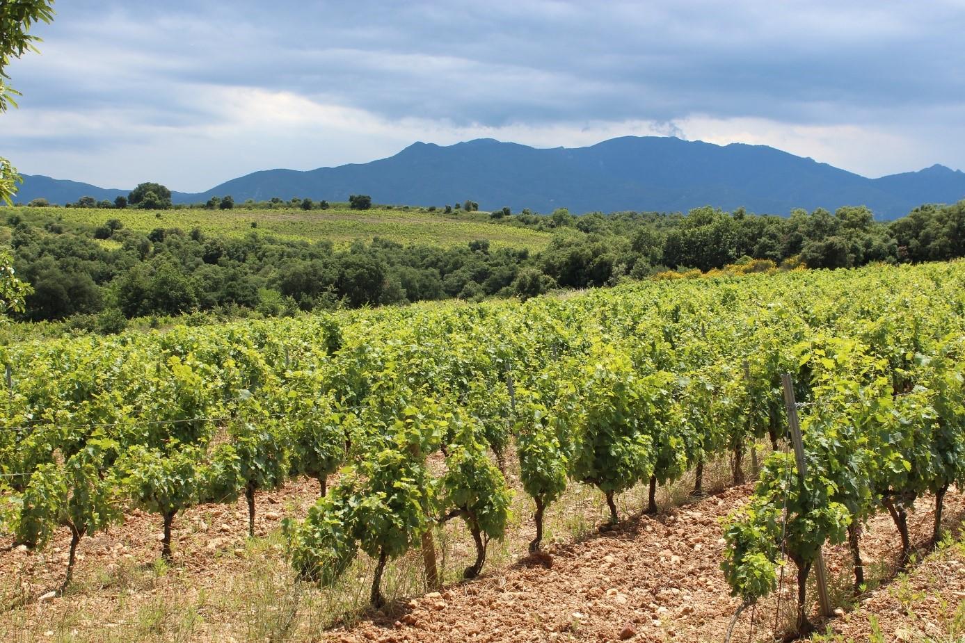 Pression phytosanitaire, accidents climatiques, précocité…Tout sur 2020