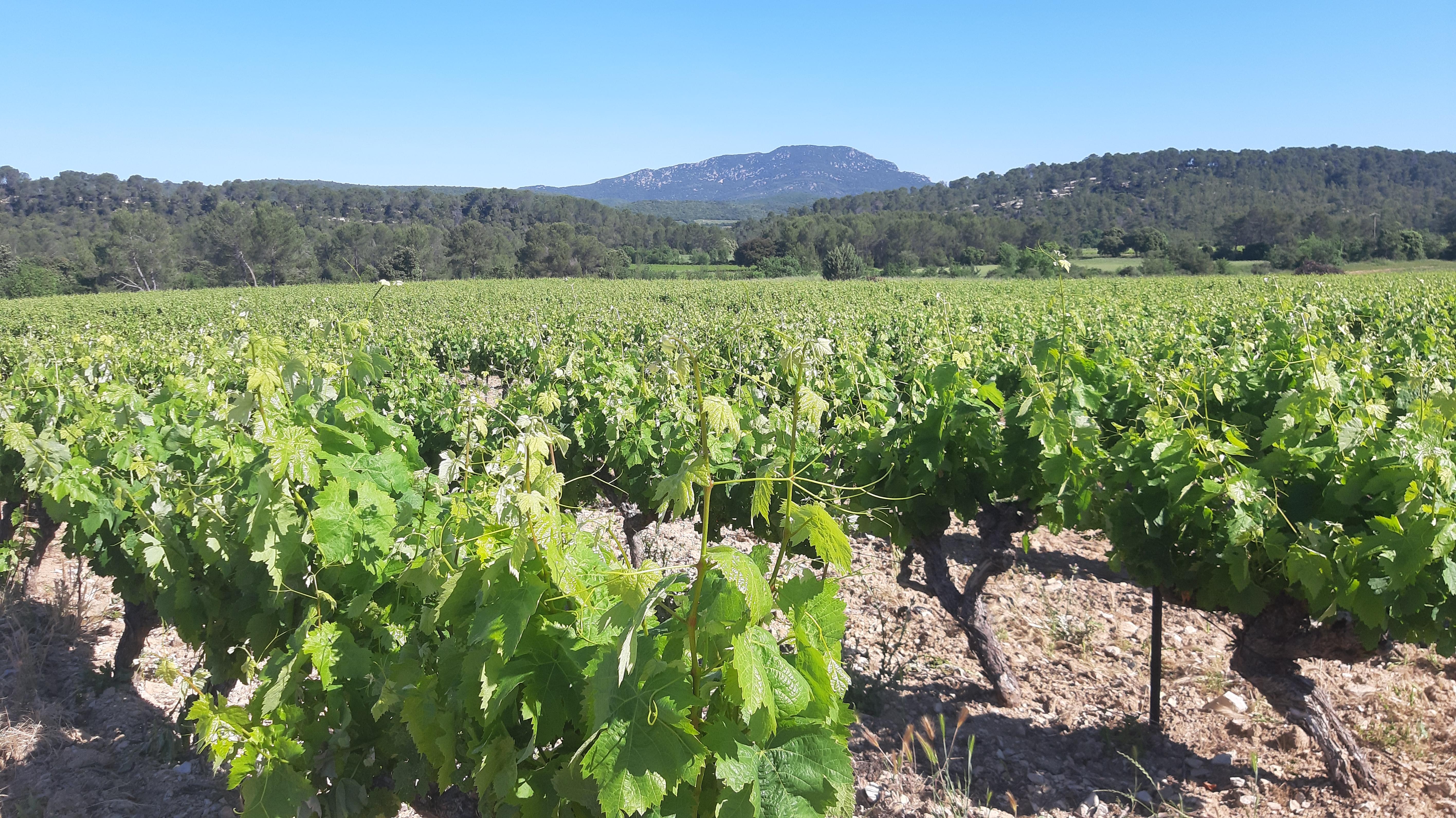 Profitez de la fin d'année pour découvrir les prochaines formations viticoles ICV