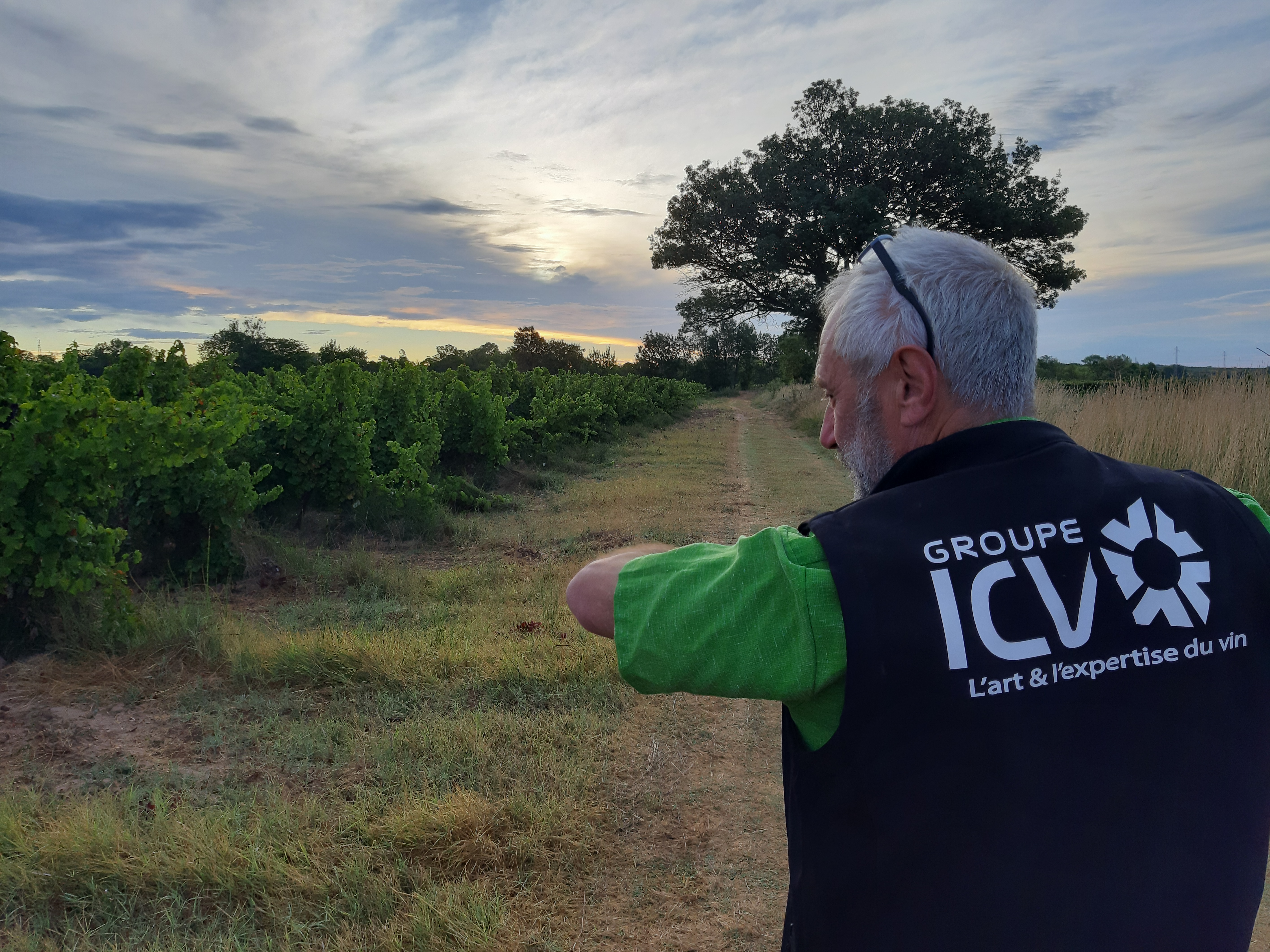 Et si vous suiviez une journée avec la R&D ICV en pleines vendanges?