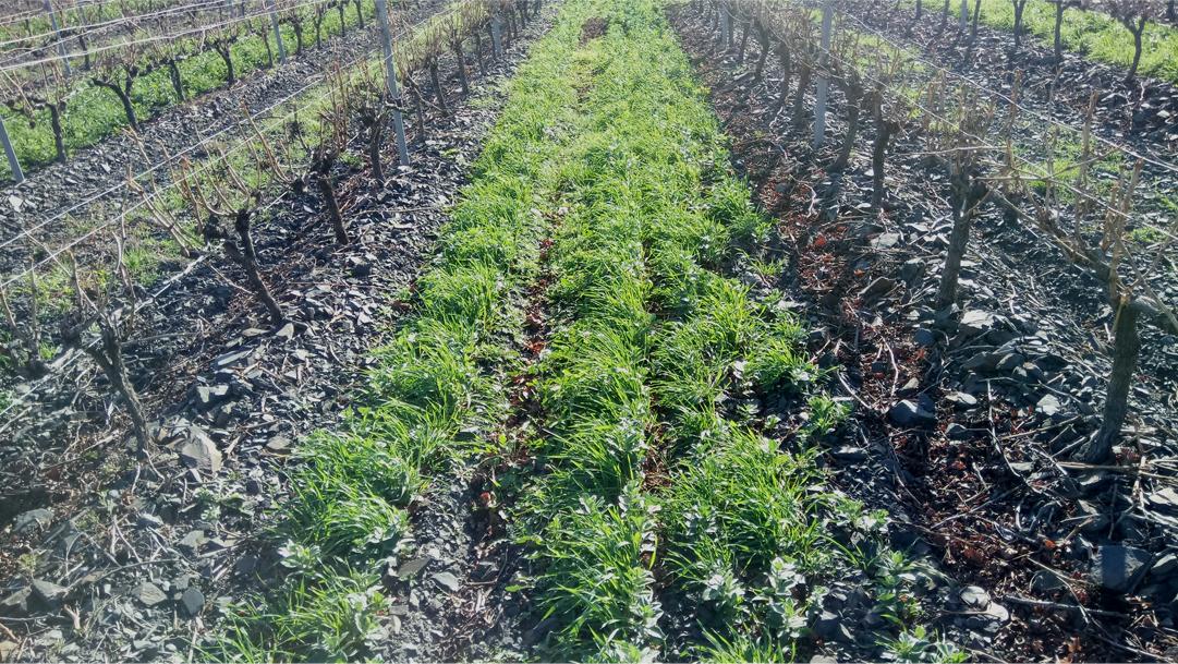 Travail des sols, couvert végétal : que faire ?