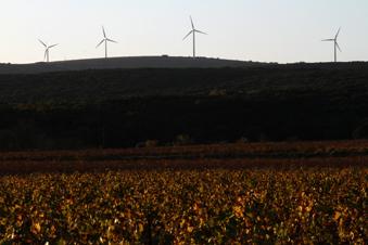 Le millésime 2015 dans les PO : vive le vent !
