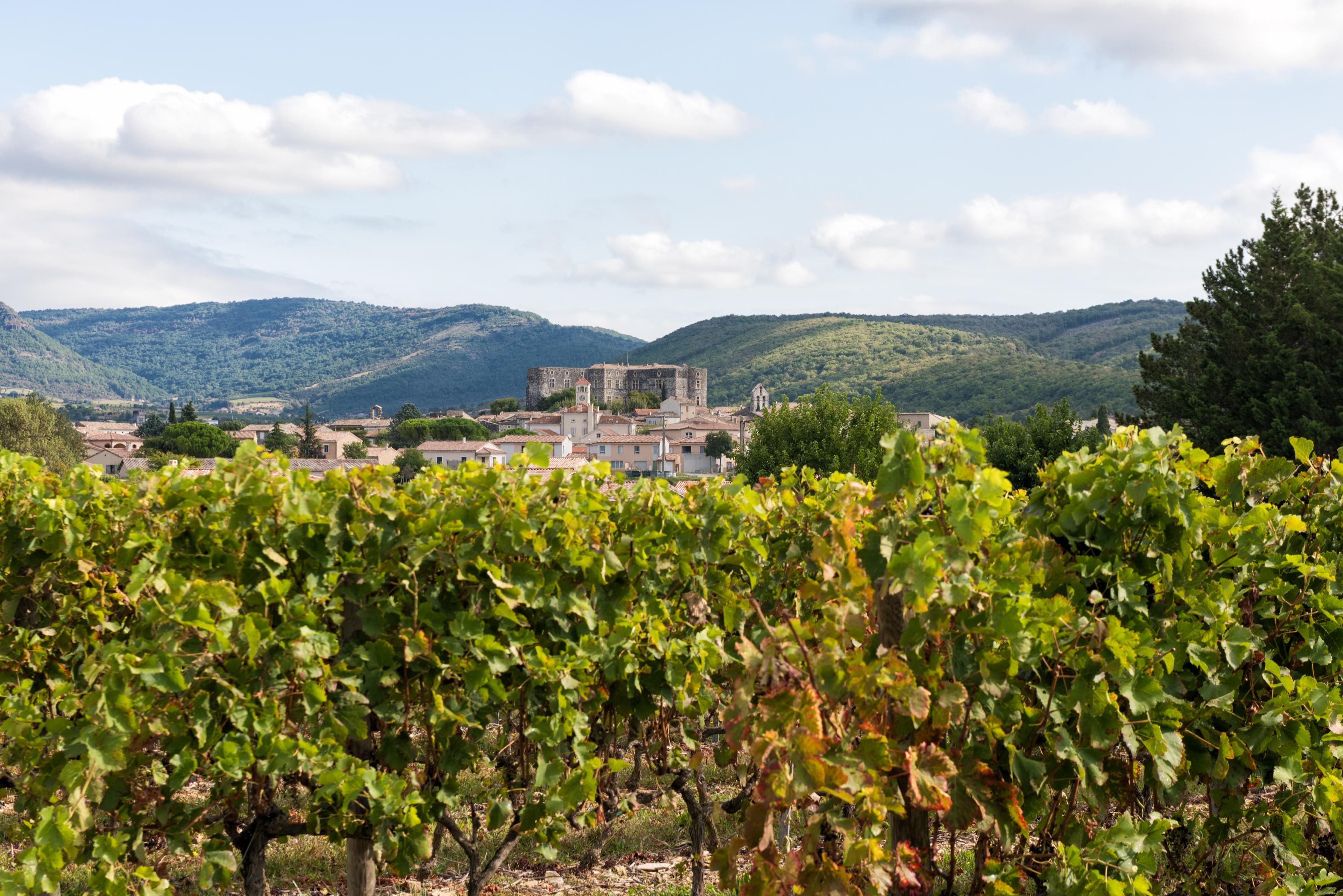 Ardèche : La fraicheur «ralentit» les maturités