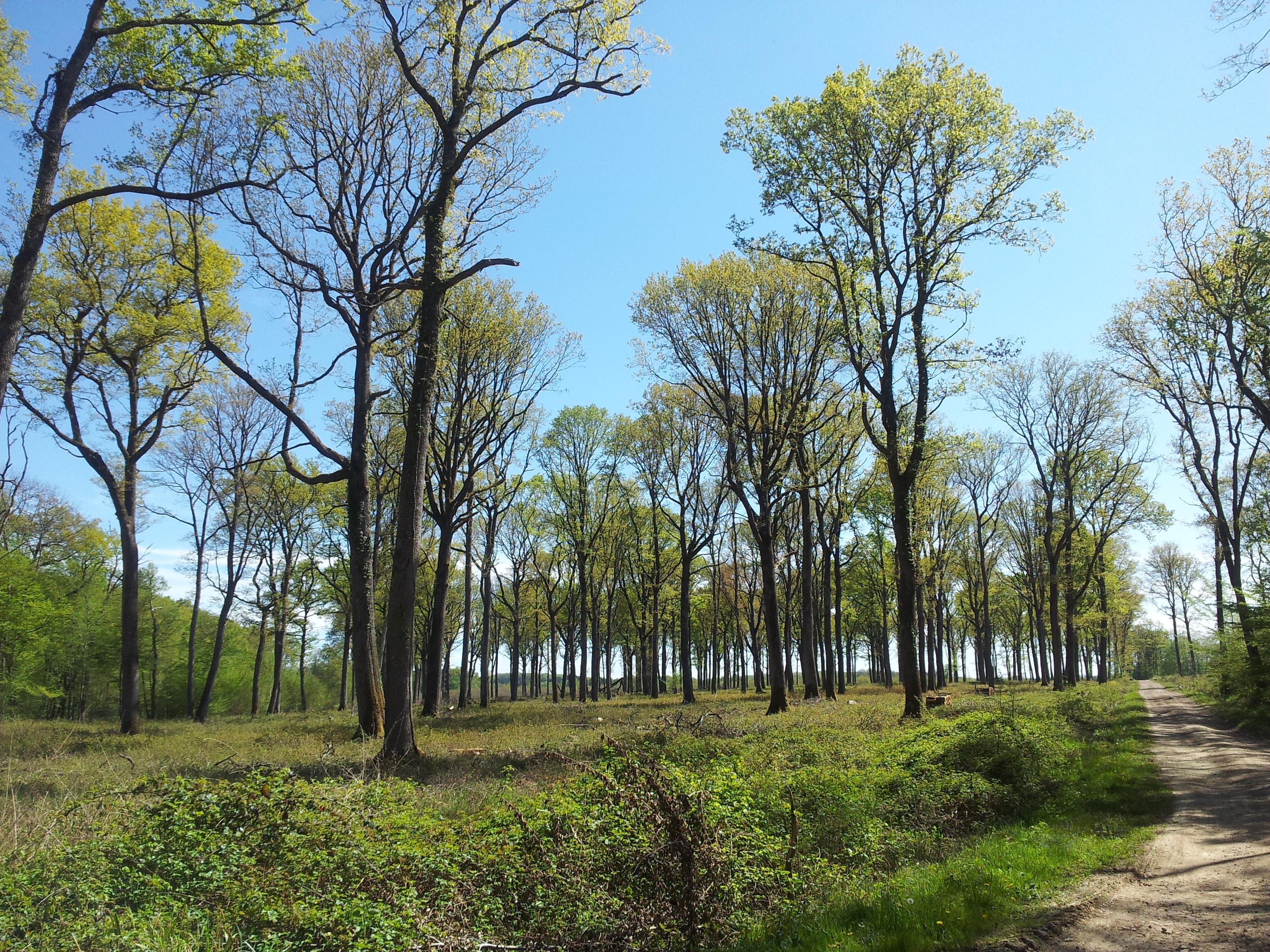 Webinar : Nouvelles perspectives dans l'utilisation du bois de chêne en vinification