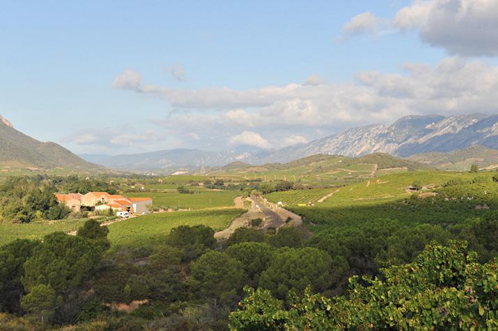 Pyrénées Roussillon : une climatologie favorable à la maturation du raisin