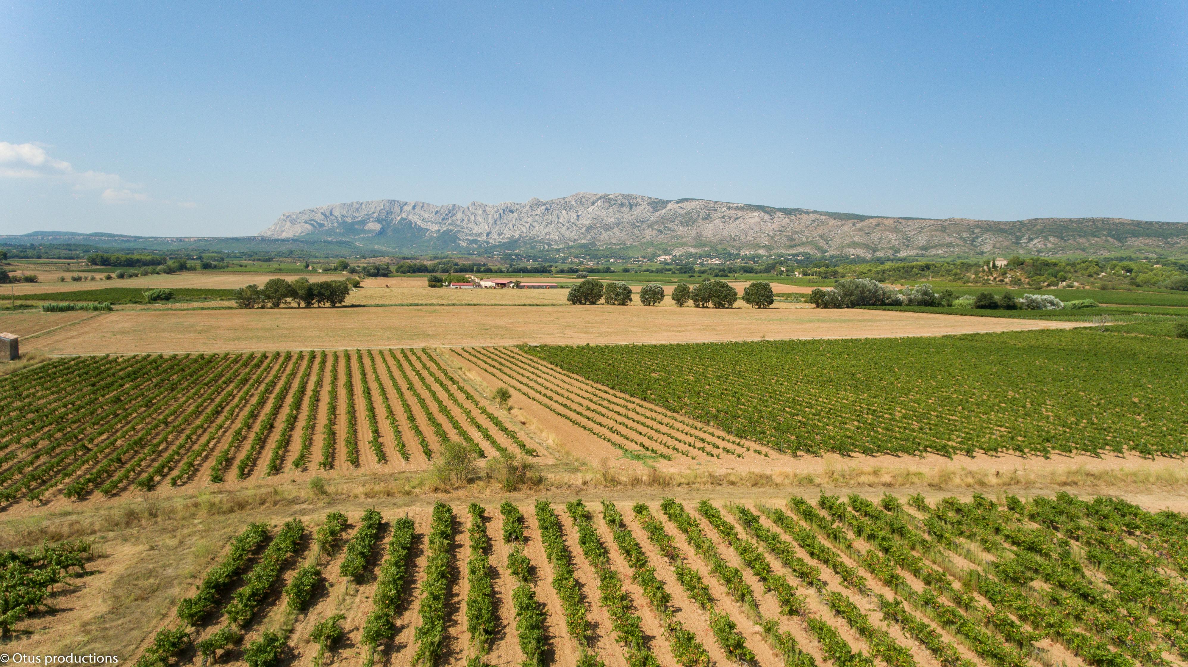 Provence : les pluies risquent de freiner les secteurs tardifs