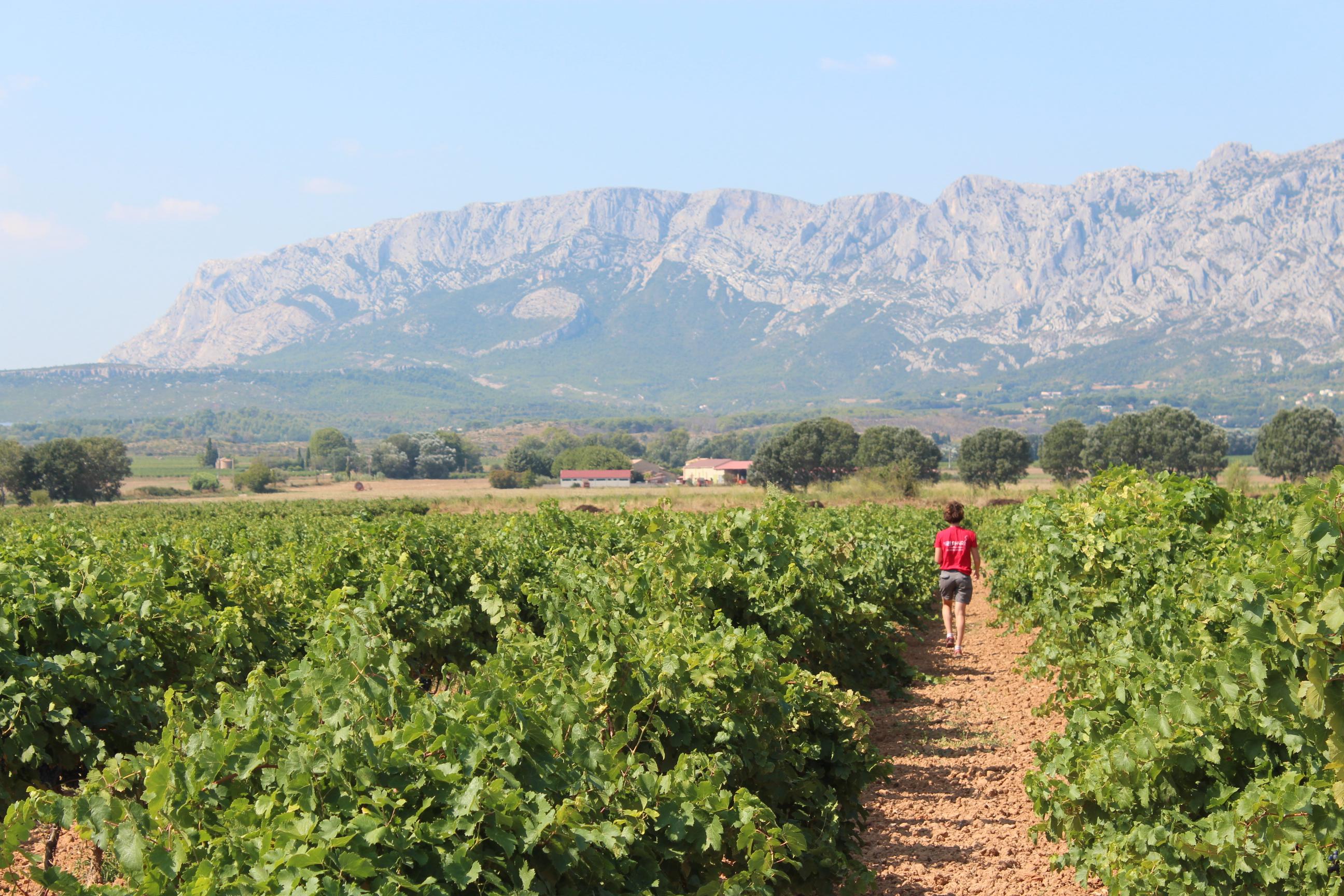 L'essentiel sur le millésime 2020 en Provence