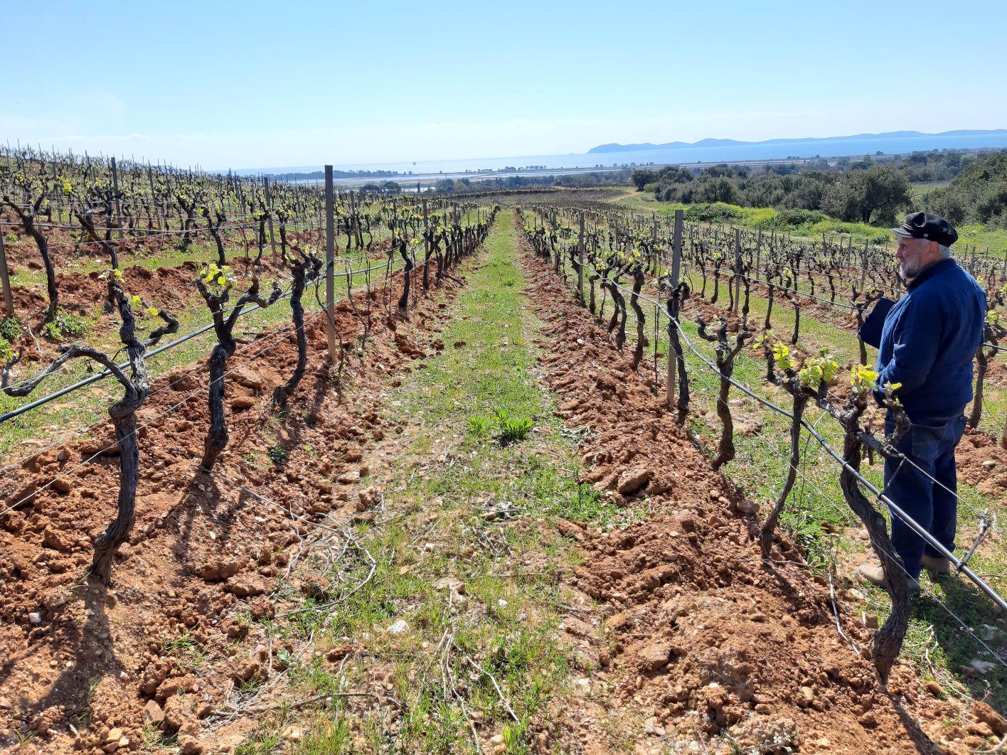 En direct du vignoble : impacts du gel en Provence