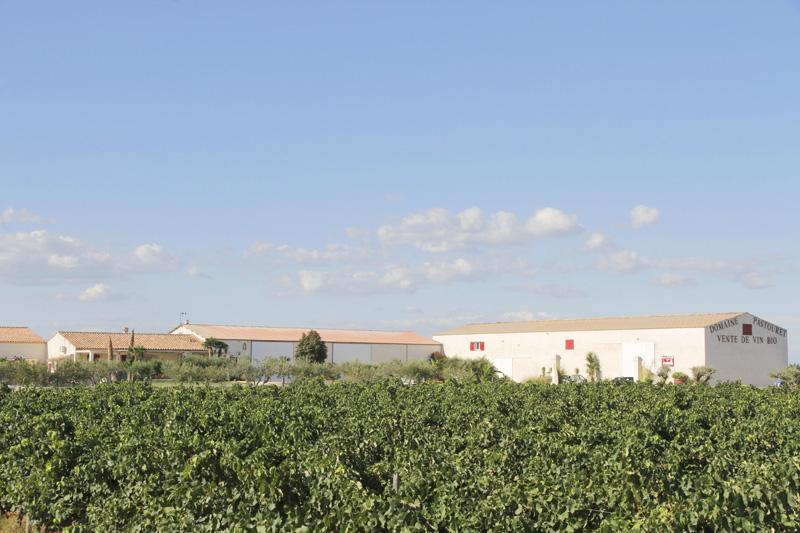 Gard : avancement des vendanges et des vinifications