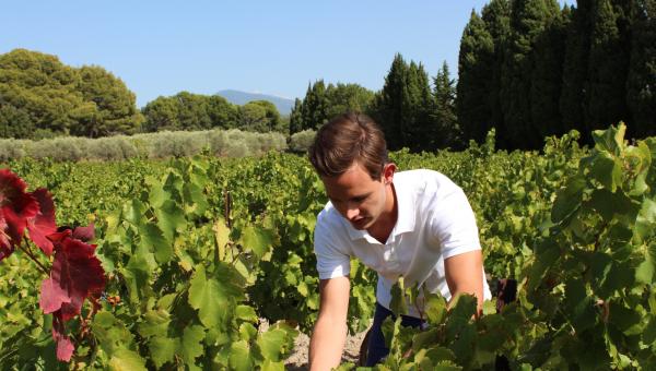 Vallée du Rhône sud : quelles tendances au vignoble ?