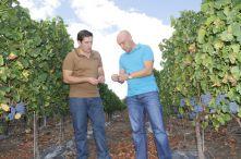 Diagnostic viticole, expertise vigne, bio, raisins