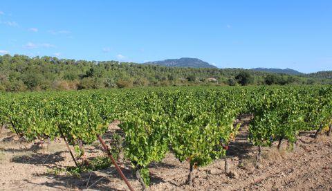 Hérault : premiers retours sur les vins 2019