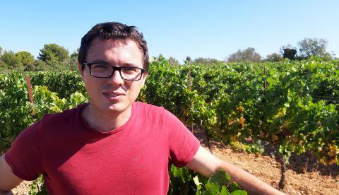 Vendanges 2019 : où en sont les vignobles dans l'Hérault ?