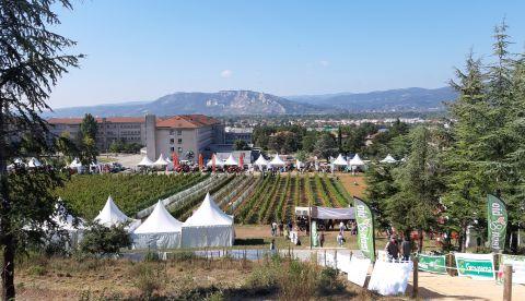 En direct du salon Tech & Bio : comment l'équipe viti ICV accompagne les viticulteurs ?