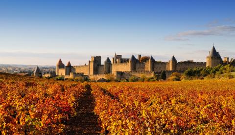 Millésime 2019 dans l'Aude : dernières infos au vignoble et en cave
