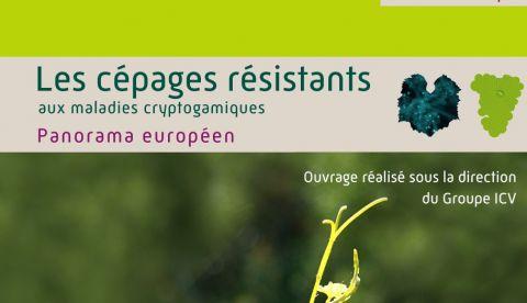 Savoir implanter des cépages résistants aux maladies et à la sécheresse