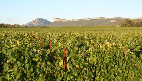 Le millésime 2019 dans l'Hérault : vignoble globalement sain, hausse spectaculaire des degrés