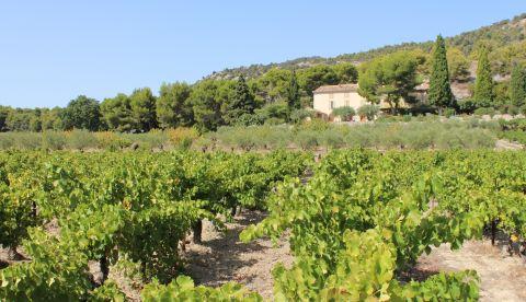 Vallée du Rhône : un millésime sain et légèrement tardif