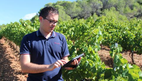 Viticulture : quelles bonnes pratiques après la récolte ?