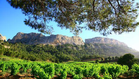 Rejoignez le webinaire ICV du 22 Juin juin (10h30 à 12h) Produire des vins de qualité après le gel : les défis du millésime 2021