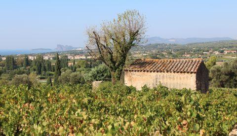 Vendanges 2021 en Provence : une qualité très satisfaisante