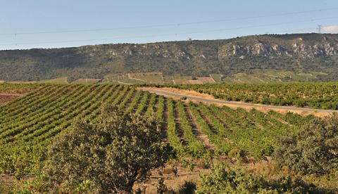La conduite du vignoble après les vendanges