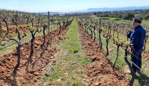 En direct du vignoble : impacts du gel en Provence
