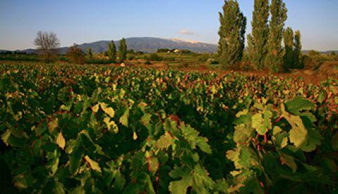 2015 en Vallée du Rhône : une large palette de profils