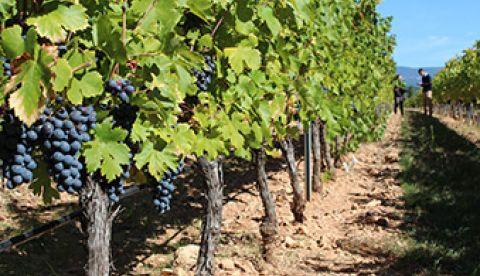 Points clés sur la campagne viticole 2018