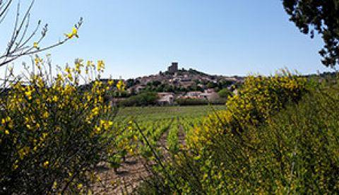 Millésime 2016 Vallée du Rhône