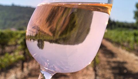 Participez aux 4 webinars ICV Aude sur l'élaboration des vins rosés