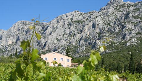 Provence : tendances du millésime 2019